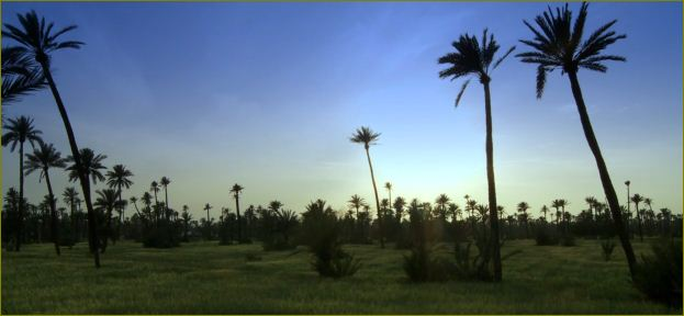 Marrakech Groves